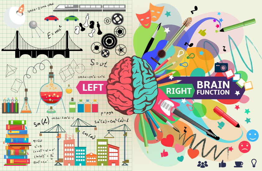 The left side of the brain is more analytical, while the right side is more intuitive and non-linear